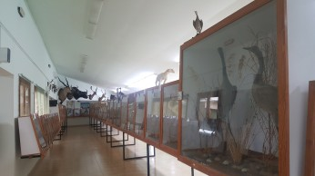 Museu de Costitx